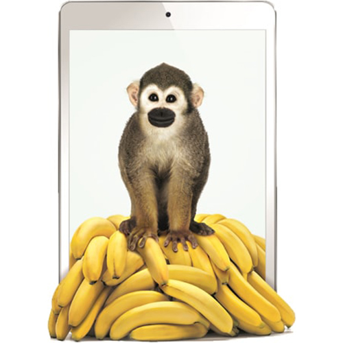 Image of a monkey on bananas.