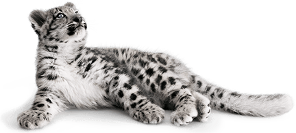 snow leopard wallpaper for iphone 4