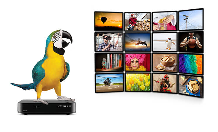 telus optik tv guide pdf