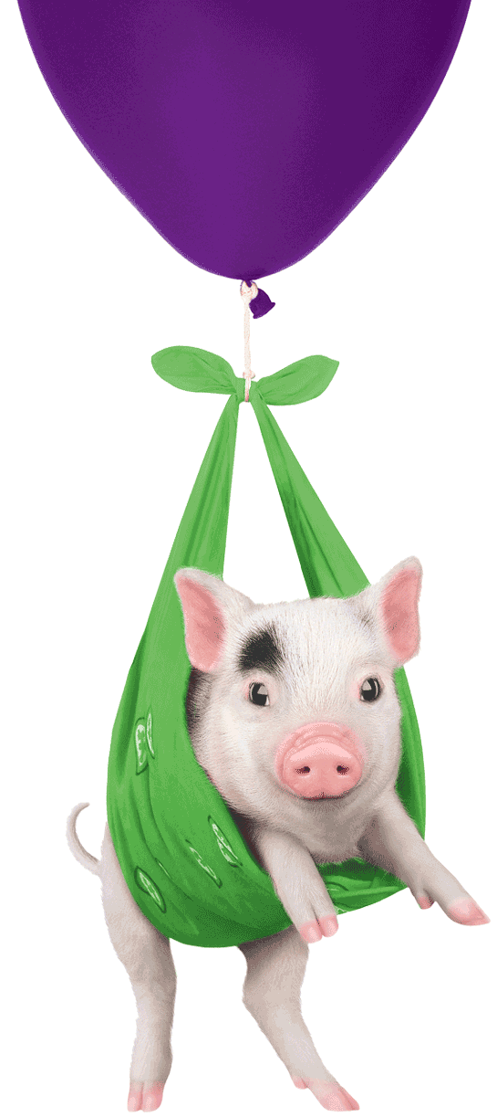 Pig floating on a balloon